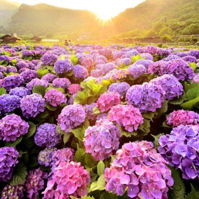 Kvetinová krása Taiwanu