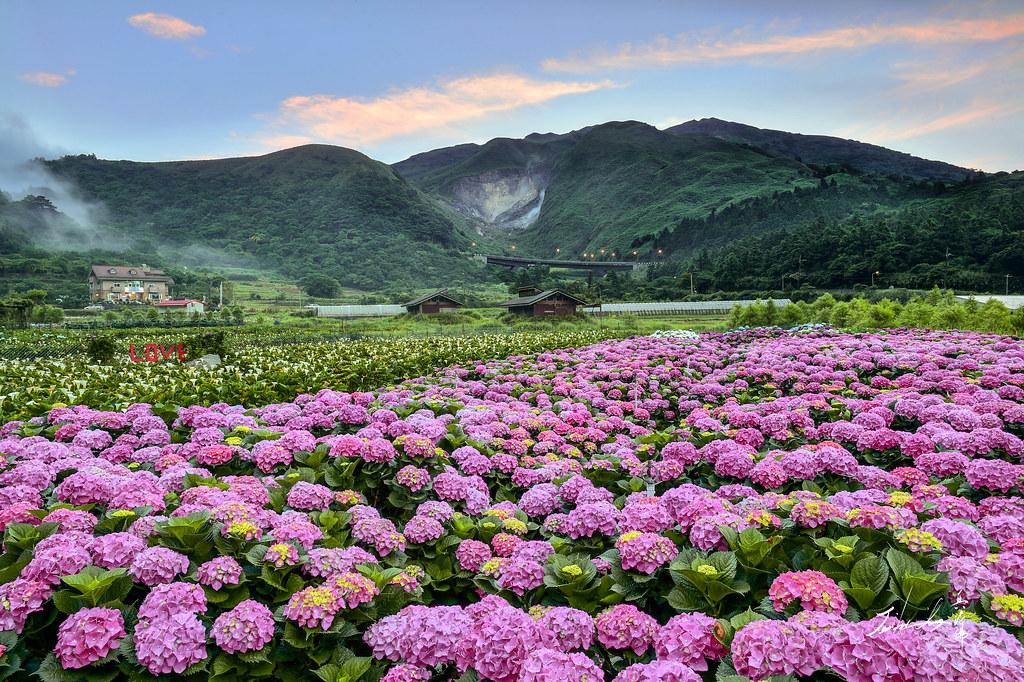 Hortenzie_Taiwan_Lady Travel
